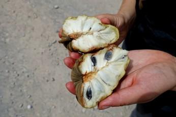 Le Chirimoya, ou pomme-liane