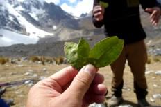 Le rituel de remerciement à la Pacha Mama avec les feuilles de coca
