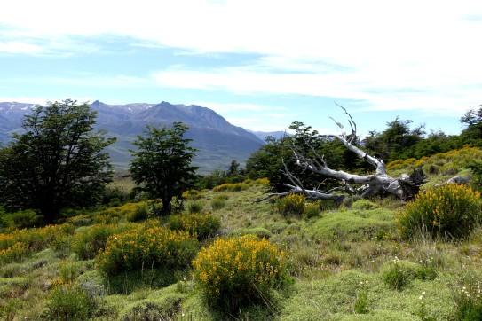 argentine-el-chalten DSC01414