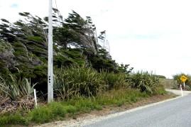 nouvelle-zelande_catlins DSC03421