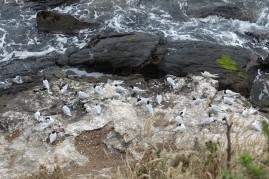 nouvelle-zelande_oamaru-dunedin-otago DSC03033