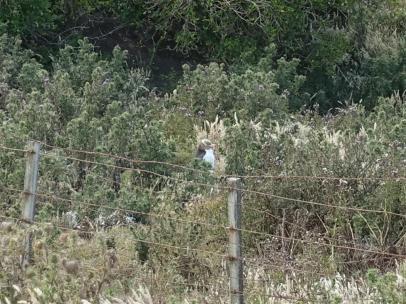 nouvelle-zelande_oamaru-dunedin-otago DSC03075_v2