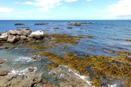 nouvelle-zelande_oamaru-dunedin-otago DSC03082