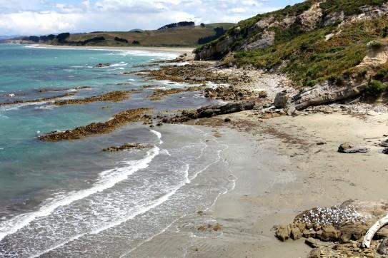nouvelle-zelande_oamaru-dunedin-otago DSC03088