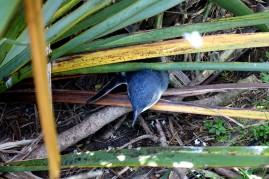 nouvelle-zelande_oamaru-dunedin-otago DSC03189