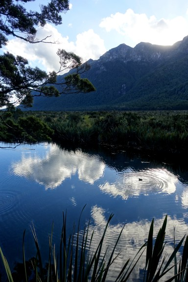 nouvelle-zelande_te-anau-milford-sound DSC03619