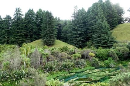 nouvelle-zelande_wellington-auckland DSC04087