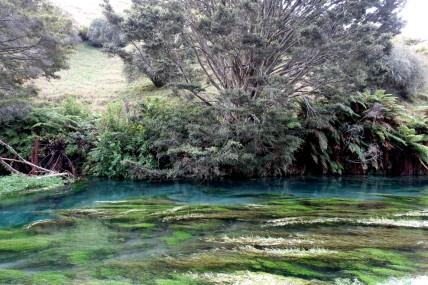 nouvelle-zelande_wellington-auckland DSC04106
