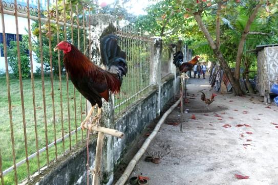 PHILIPPINES_malapascua DSC05403
