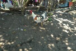 PHILIPPINES_manille DSC05087