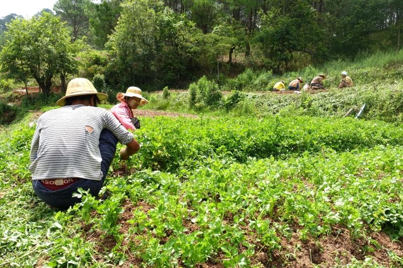 Myanmar_Lac Inle DSC03214