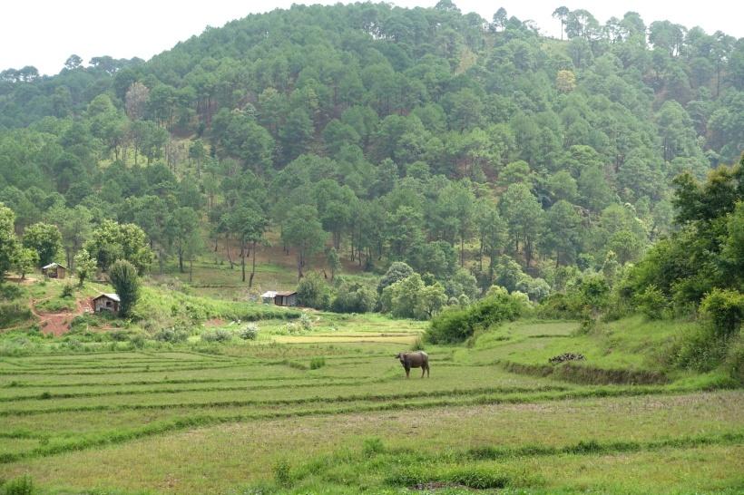 Myanmar_Lac Inle DSC03216