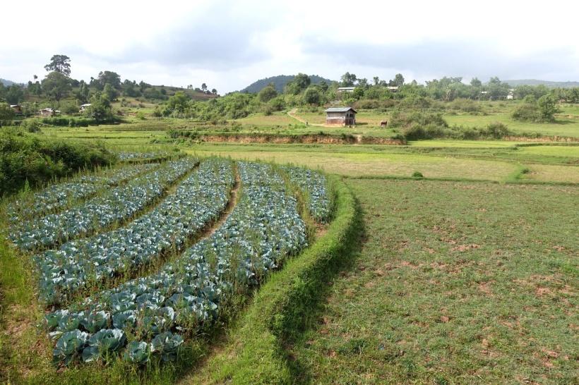 Myanmar_Lac Inle DSC03267