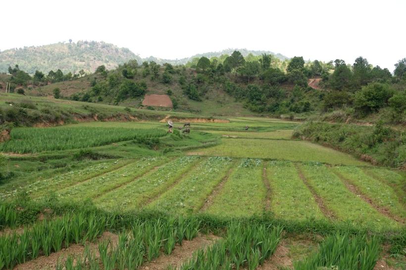 Myanmar_Lac Inle DSC03274