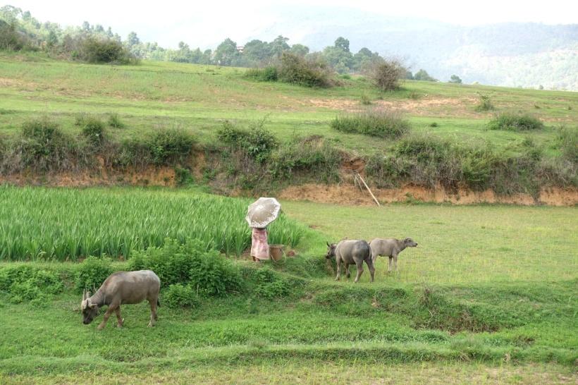 Myanmar_Lac Inle DSC03280