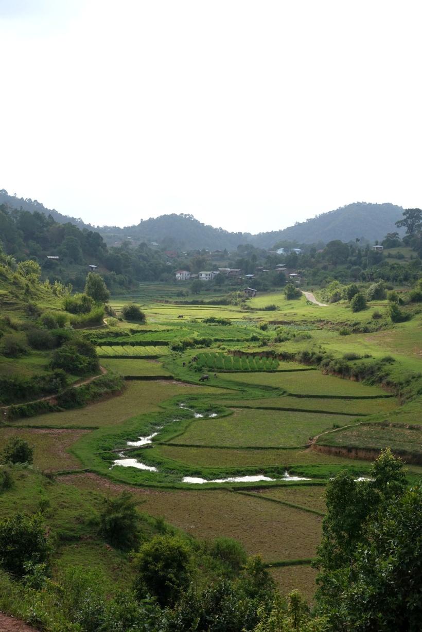 Myanmar_Lac Inle DSC03282
