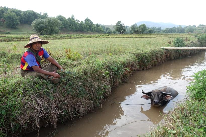 Myanmar_Lac Inle DSC03293