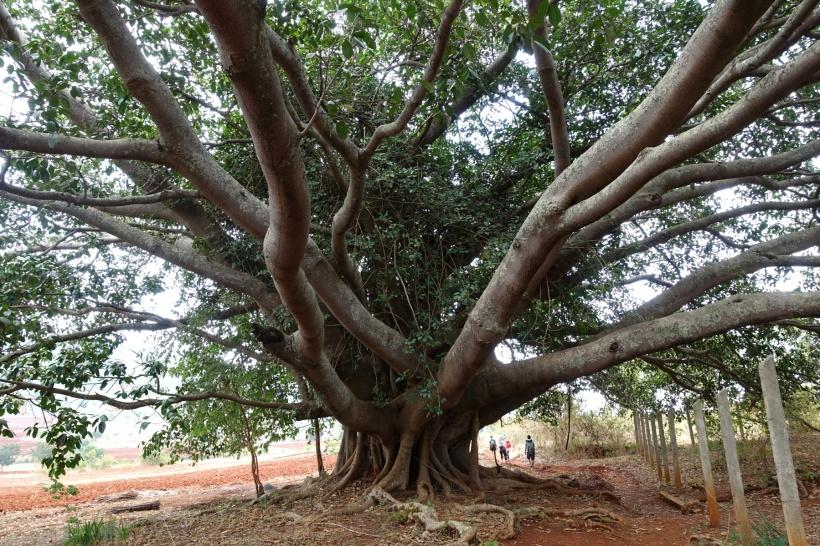 Myanmar_Lac Inle DSC03380