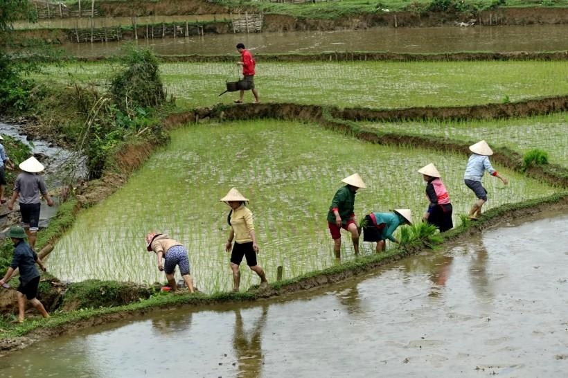 VIETNAM_sapa DSC07060