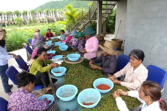 cambodge_kampot DSC01244