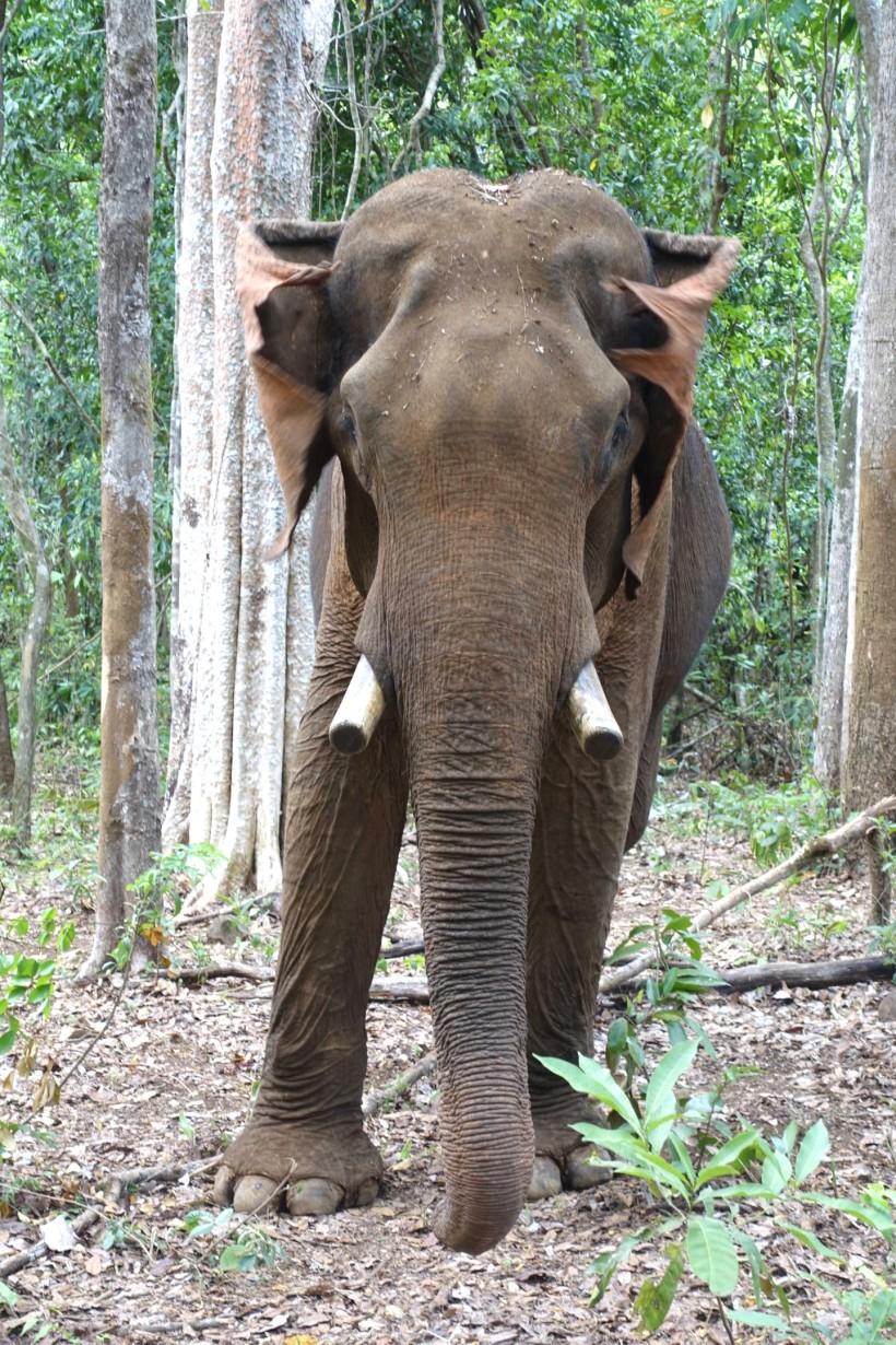 cambodge_sen-monorom_mondulkiri DSC09763