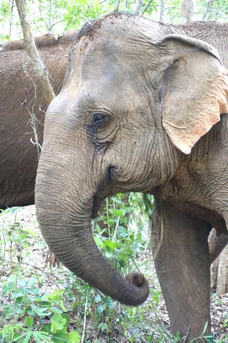 cambodge_sen-monorom_mondulkiri DSC09770