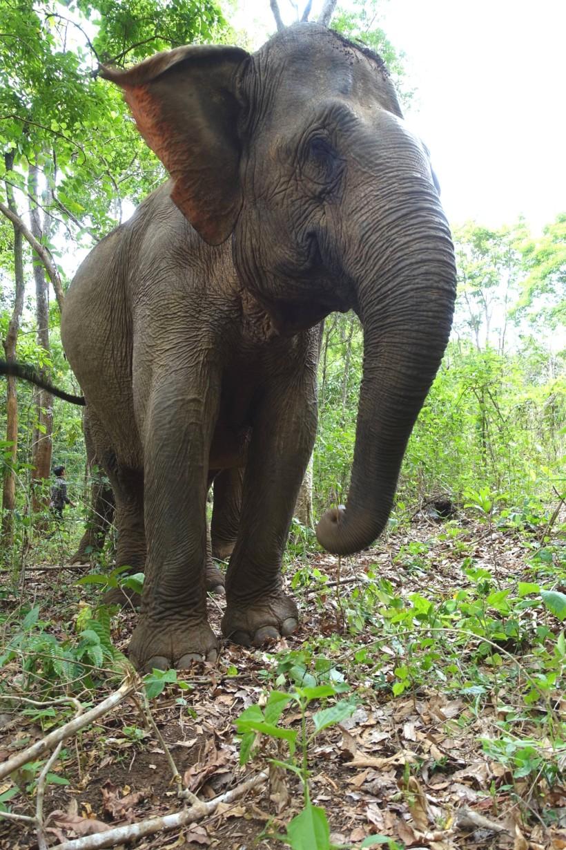 cambodge_sen-monorom_mondulkiri DSC09779