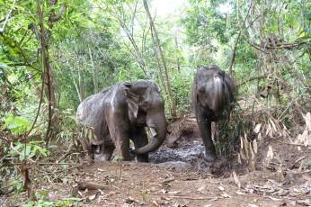 cambodge_sen-monorom_mondulkiri DSC09859