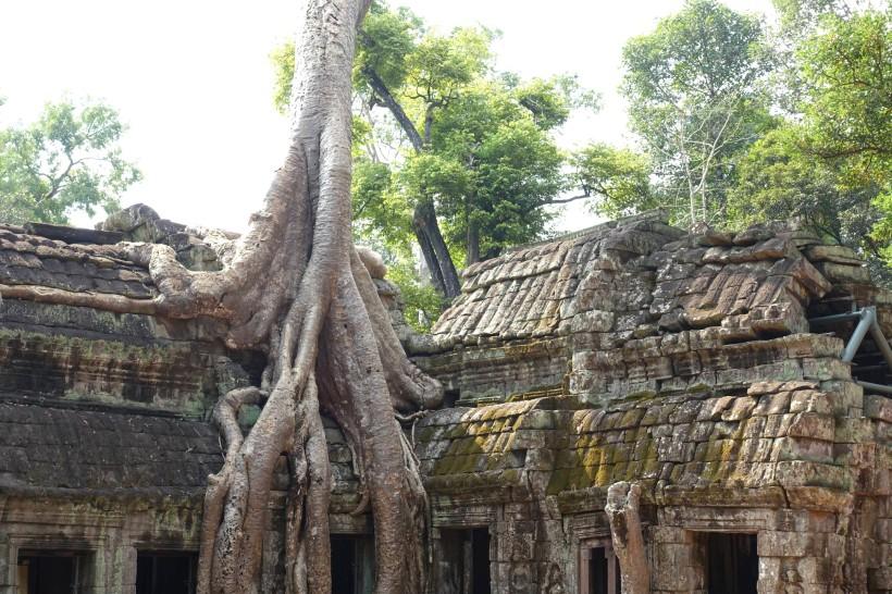cambodge_siem-reap_angkor DSC00375_ta-phom