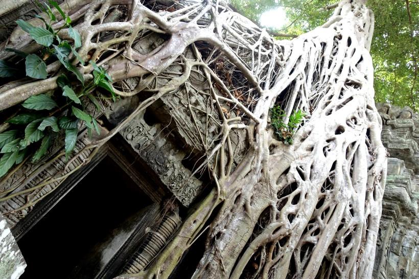 cambodge_siem-reap_angkor DSC00399_ta-phom