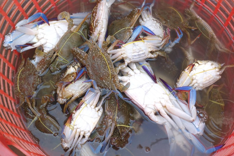 DSC01346 cambodge_kep