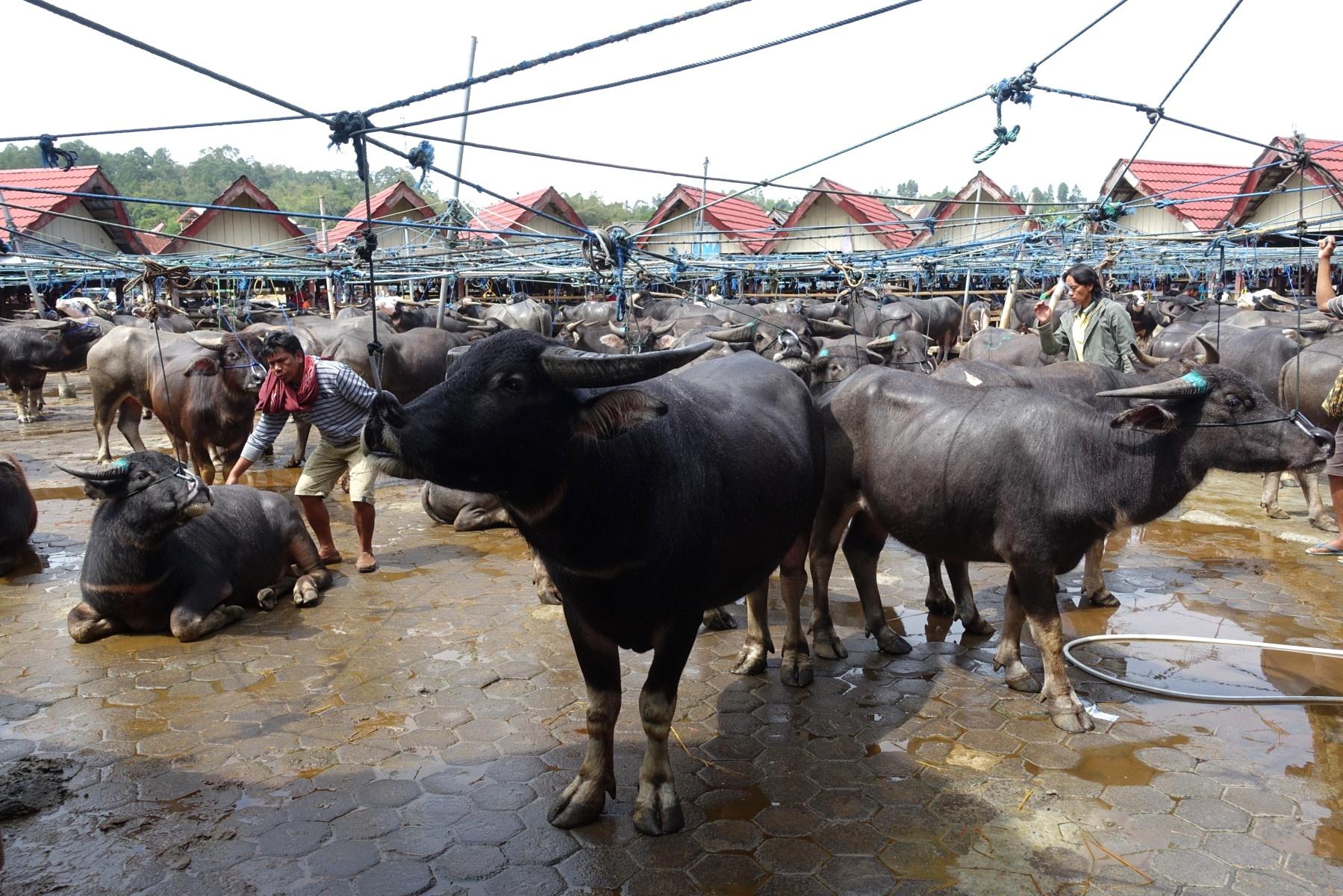 Indonesie_Sulawesi_Toraja_Rantepao DSC05028