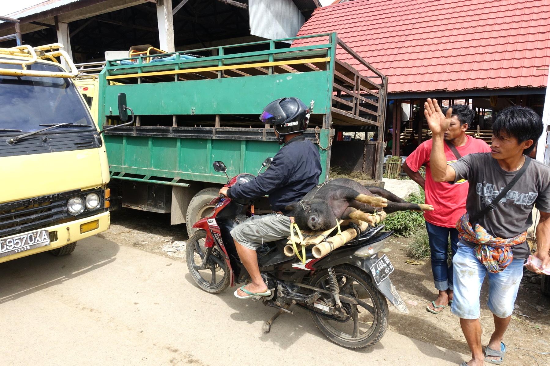 Indonesie_Sulawesi_Toraja_Rantepao DSC05054